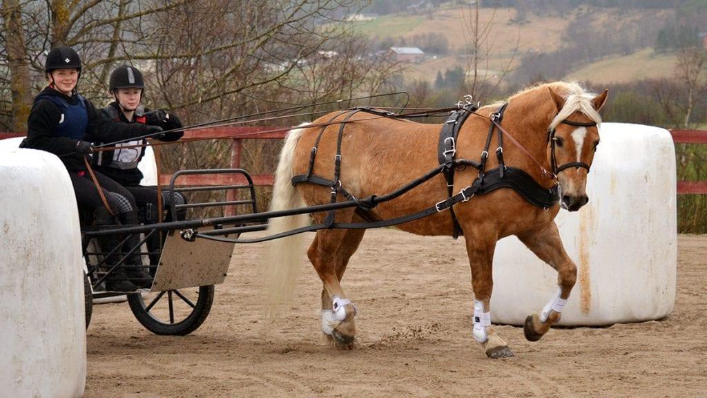Hest i full fart på Storsteigen