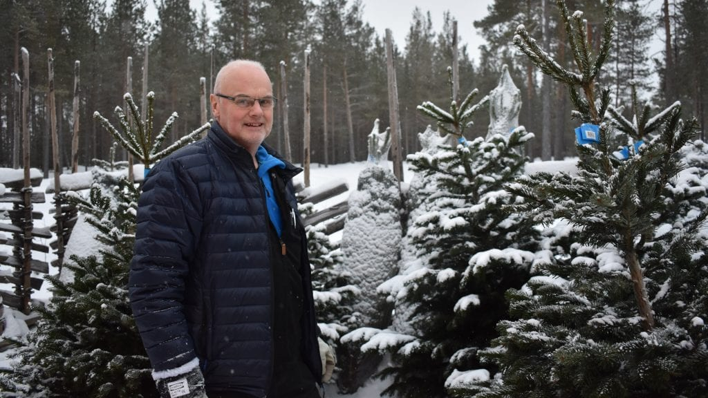 SELGER JULETRÆR: Kjell Ove Dølplass ved Alvdal Innkjøpslag selger dansk edelgran som gjør seg godt til juletre. Foto: Torstein Sagbakken.