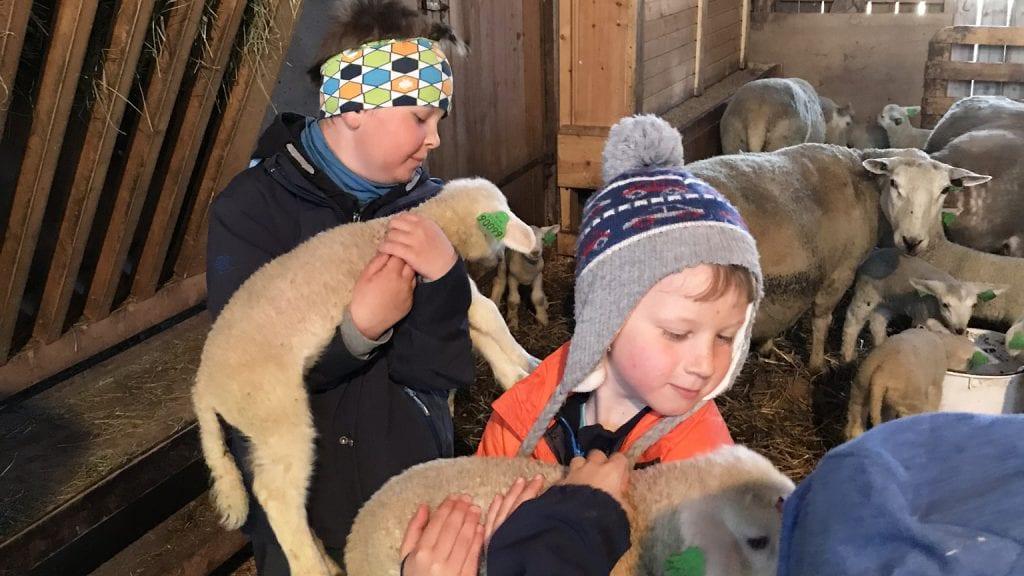 HYGGELIG DAG: Det var mye kos for ungene ved SFO da de fikk kose og klappe lam. Alle foto: Privat.